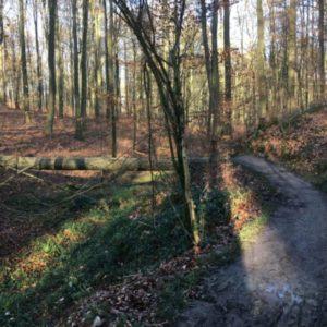 Marche consciente… entre randonnée et pleine conscience